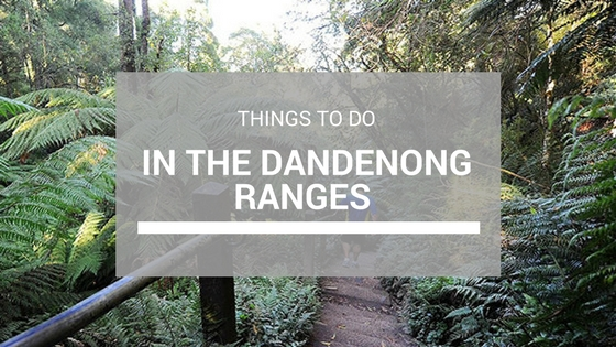 Dandenong Ranges Things To Do