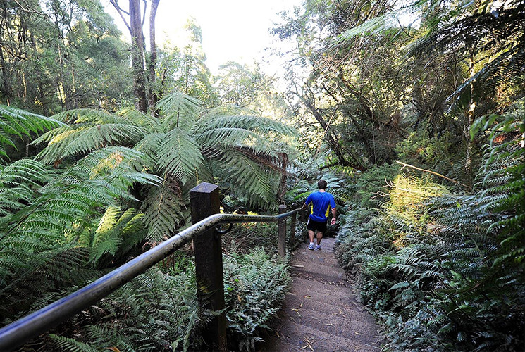 12 Things To Do in The Dandenong Ranges